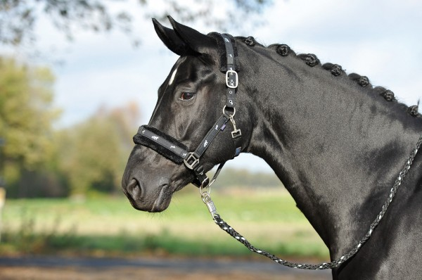 Halfter SILVERHORSE © BUSSE GmbH